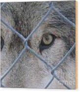 Wolf Eyes Wood Print