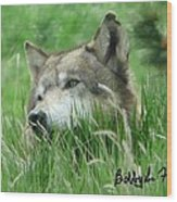 Wolf Laying In Grass Wood Print