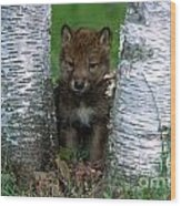 Wolf Pup Playing Peekaboo Wood Print