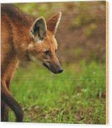 Wolf Strut Wood Print