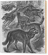 Wolves Wood Print