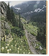 Woman Hiking On Sperry Chalet Trail Wood Print