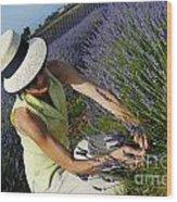 Woman Picking Up Lavender Flowers In Field Wood Print