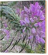 Wonder Flower Wood Print
