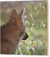Wondering Wolf Wood Print