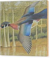 Wood Duck Flying Wood Print