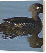 Wood Duck I Wood Print