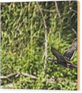 Wood Duck In Flight Wood Print