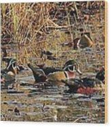 Wood Duck Trio Wood Print