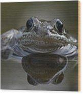 Wood Frog  Rana Sylvatica Wood Print