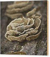 Wood Shrooms Wood Print