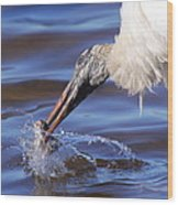 Wood Stork Fishing Wood Print