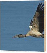 Wood Stork In Flight Wood Print