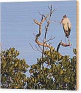 Wood Stork Out On A Limb Wood Print