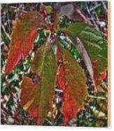 Woodbine Autumn Colors Wood Print