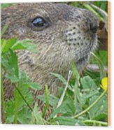 Woodchuck Wood Print