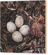 Woodcock Nest And Eggs Wood Print