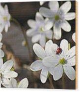 Woodland Flora And Friend Wood Print