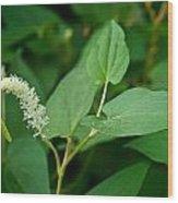 Woodland Flower 1 Wood Print