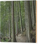 Woodland Forest Path Wood Print
