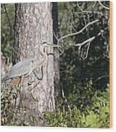 Woodland Great Blue Heron Wood Print
