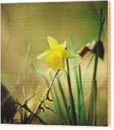 Woodland Narcissus Wood Print