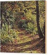 Woodland Path, Mount Stewart, Ards Wood Print