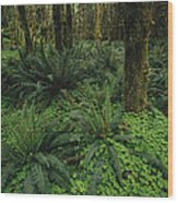 Woodland Rain Forest View With Mosses Wood Print by Melissa Farlow