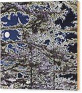 Woodland Solitude Wood Print