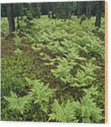Woodland View In A Pine Forest Wood Print