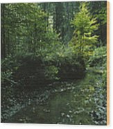 Woodland View With Stream Wood Print