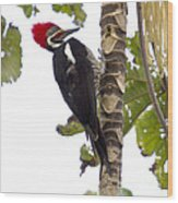 Woodpecker 1 Wood Print