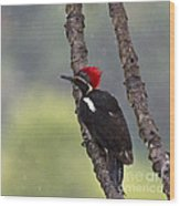 Woodpecker 4 Wood Print