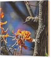 Woodpecker Listening Wood Print