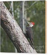 Woodpecker Sizes Me Up Wood Print