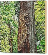 Woodpecker Tree Wood Print