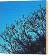 Woods And Sky Wood Print