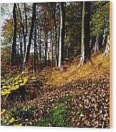 Woods During Autumn Wood Print