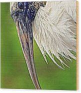 Woodstork Portrait Wood Print