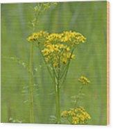 Woolly Ragwort Wood Print
