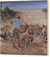 Working Sheep In South-africa Wood Print