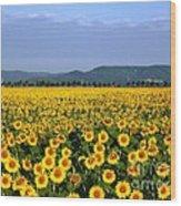 World Of Sunflowers Wood Print
