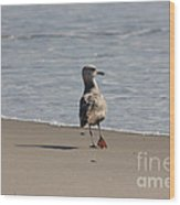 Wounded Bird 6 Hurt Tired Calm Ocean Beach Photos Pictures Bird Seagulls Oceanview Beaches Water Sea Wood Print by Pictures HDR