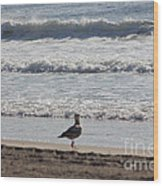 Wounded Seagull 4 Seagulls Birds Photos Beach Beaches Sea Ocean Oceanview Scenic Seaview Art Pics Wood Print
