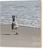 Wounded Seagull 5 Seagulls Bird Beach Beaches Ocean Photos Pictures Art Photography Photograph Image Wood Print