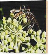 Wrangling Wasps Wood Print