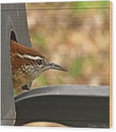 Wren Peeking Out Wood Print