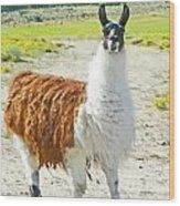 Wyoming Llama - El Tuffo Wood Print