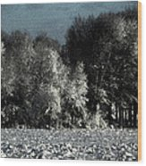 Wyoming Snowstorm October 2011 Wood Print