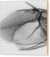 X-ray Of A Clown Triggerfish Wood Print